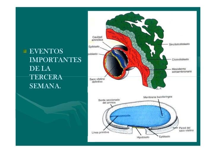 EJES CORPORALES                Dorsoventral                Anteroposterior                Y laterales (derecha e izquierda...