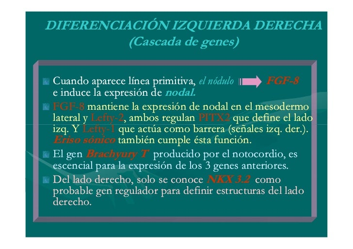 EMBRIOLOGIA: 4 A 8 SEMANAPERIODO CRÍTICO DEL DESARROLLOFASES DEL DESARROLLO   CRECIMIENTO   MORFOGÉNESIS   DIFERENCIACIÓN