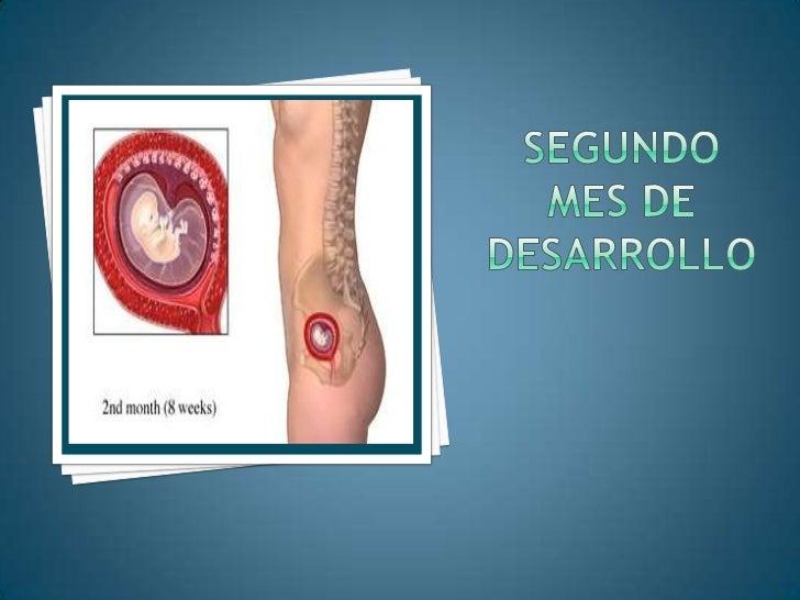 Las hojas viscerales se fusionan formando dos membranas peritoneales:<br />Meso dorsal:<br />28 días, el intestino se sost...