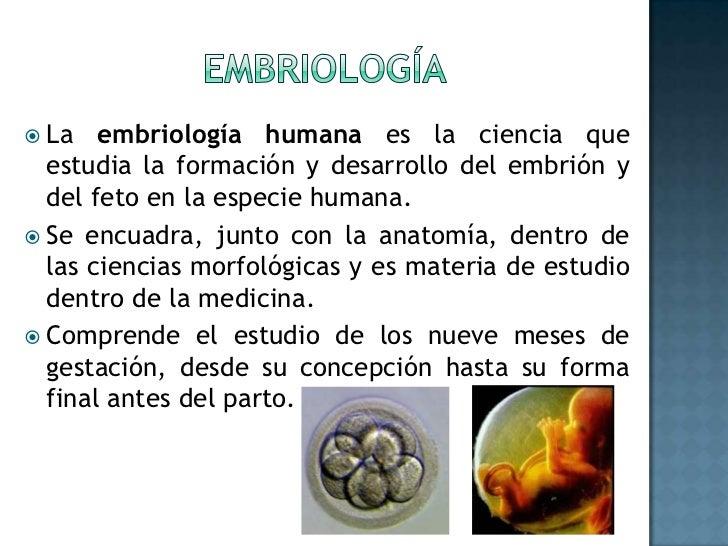 Embriología día/semana/mes
