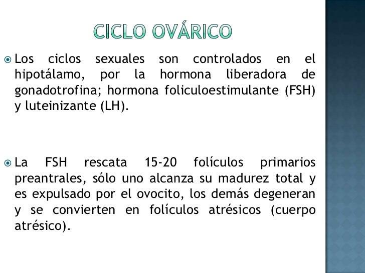 Ciclo ovárico<br />Los ciclos sexuales son controlados en el hipotálamo, por la hormona liberadora de gonadotrofina; hormo...