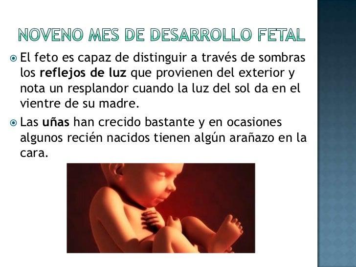 El oído comienza a desarrollarse gracias a las células nerviosas del cerebro. <br />Casi al mismo tiempo, el feto tiene ya...