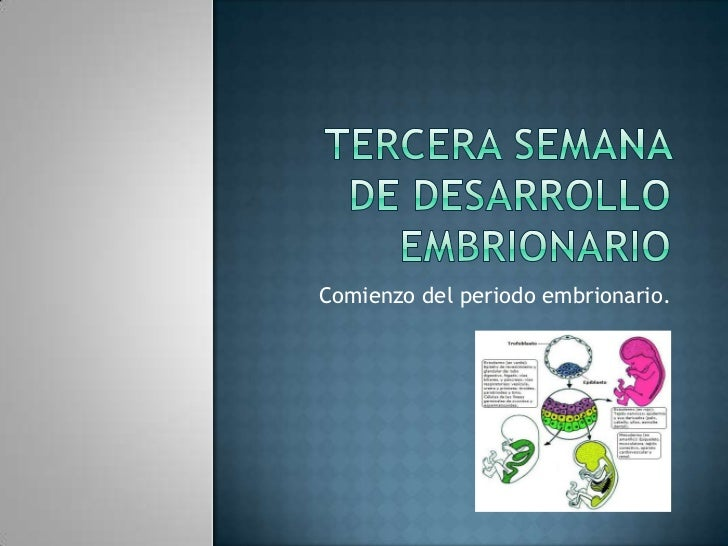 Tercera semana de desarrollo Embrionario<br />Comienzo del periodo embrionario.<br />