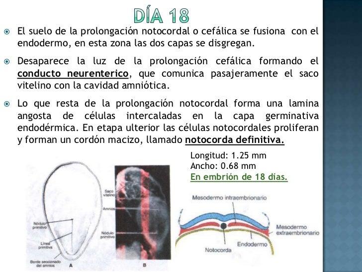Con la formación de la membrana cloacal, la pared posterior del saco vitelino origina un divertículo llamado alantoides (d...