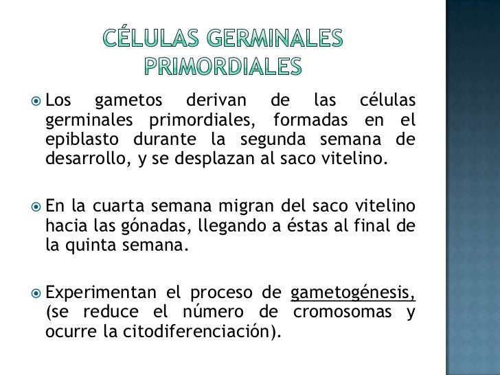 Células germinales primordiales<br />Los gametos derivan de las células germinales primordiales, formadas en el epiblasto ...