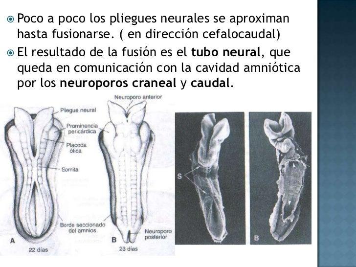 <ul><li>Hipotelorismo