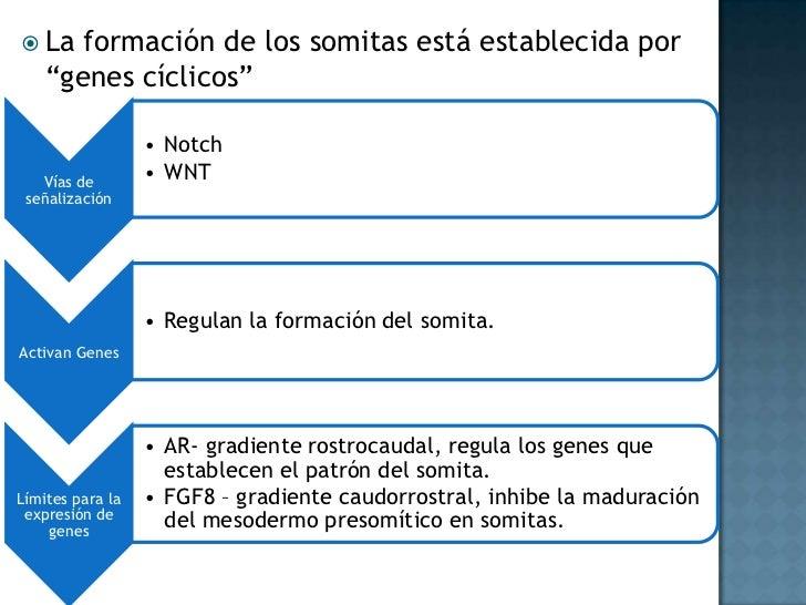 Causas<br />Diabetes materna<br />Características hereditarias<br />