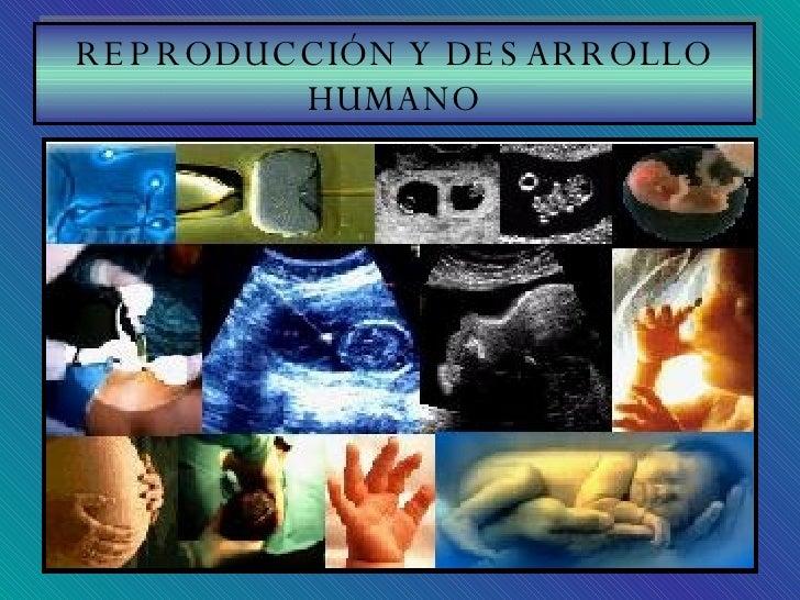 REPRODUCCIÓN Y DESARROLLO HUMANO