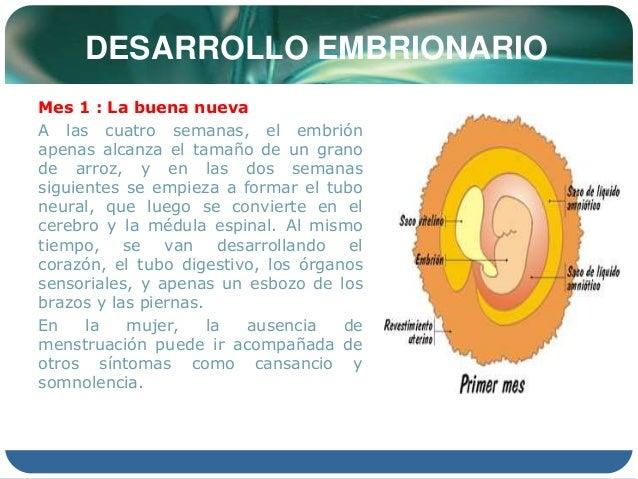 Embriologia - Menstruacion dos veces al mes ...