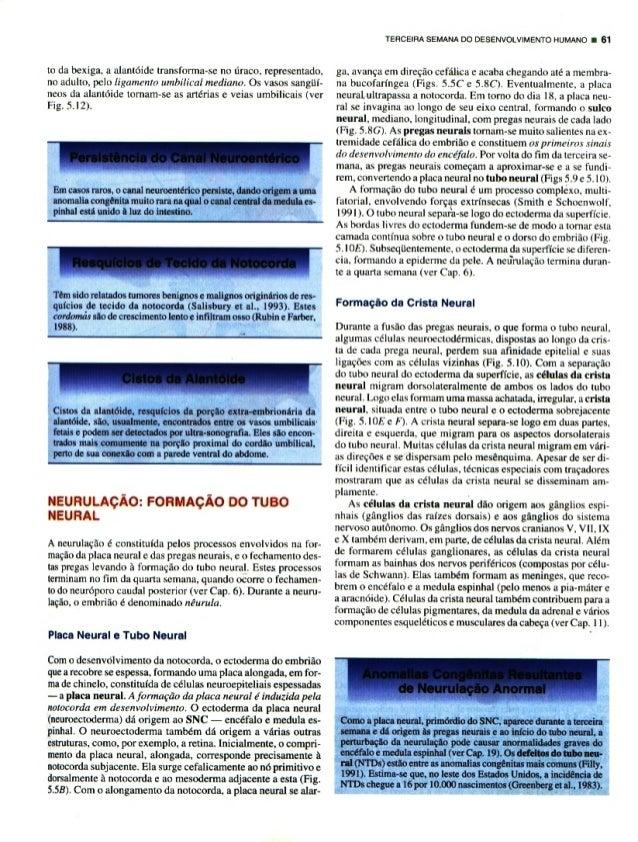 Embriologia básica (moore-persaud)