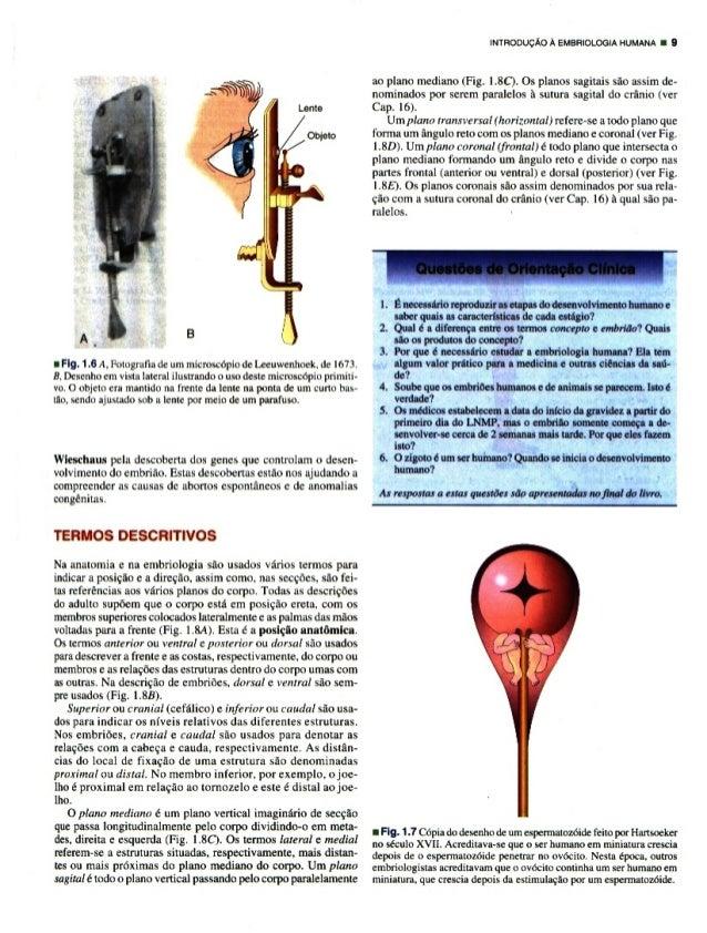 F.  Fly.  1 .6 A,  Fotografia de um microscopic de Leeuwenhoek,  de I673. B.  Desenho em vista lateral ilustrando o uso des...