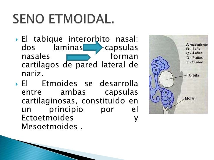 neumatizacion de senos paranasales pediatria pdf