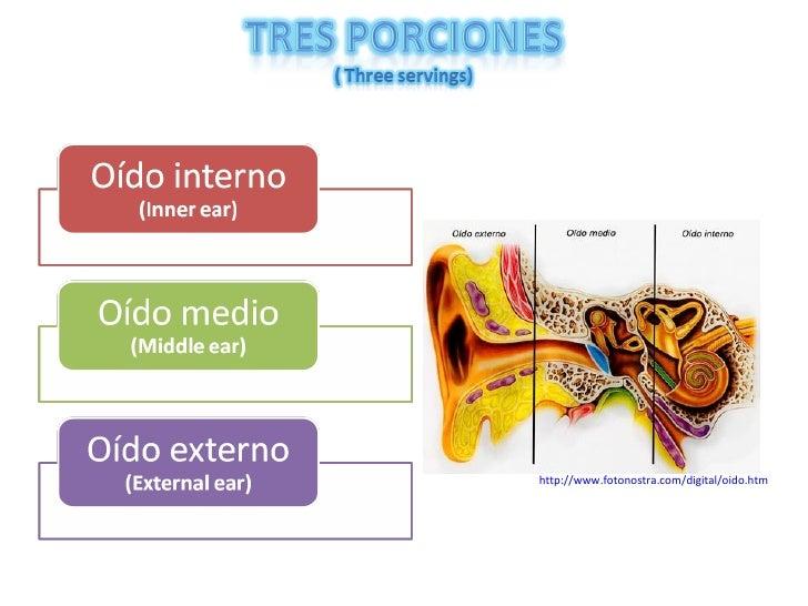 Embriologia del sistema auditivo Slide 2