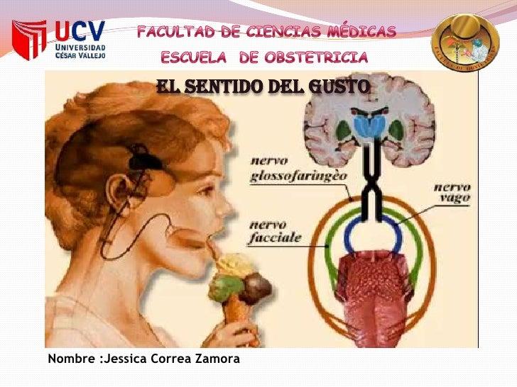 FACULTAD DE CIENCIAS MÉDICAS  ESCUELA  DE OBSTETRICIA  EL SENTIDO DEL GUSTO  Nombre :Jessica Correa Zamora