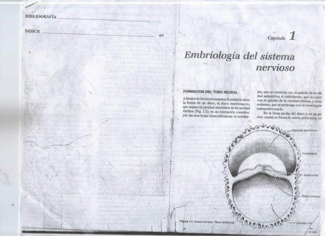 Embriologia  y sistema  nervioso