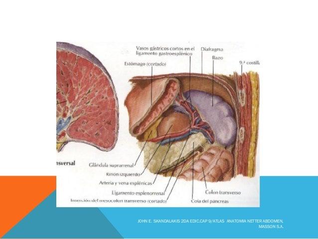 Embriologia del pancreas
