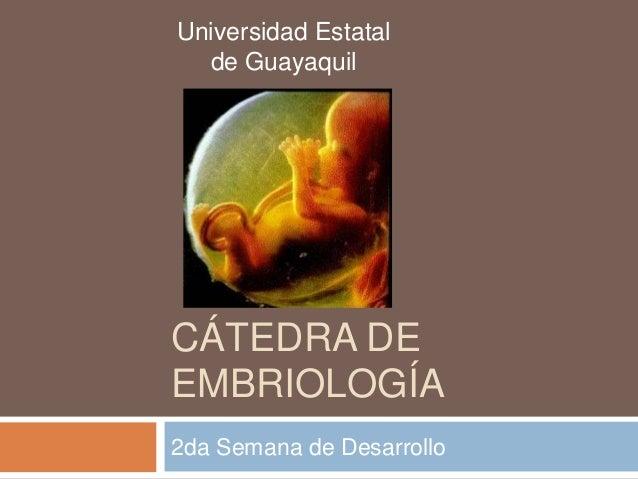 CÁTEDRA DE EMBRIOLOGÍA 2da Semana de Desarrollo Universidad Estatal de Guayaquil