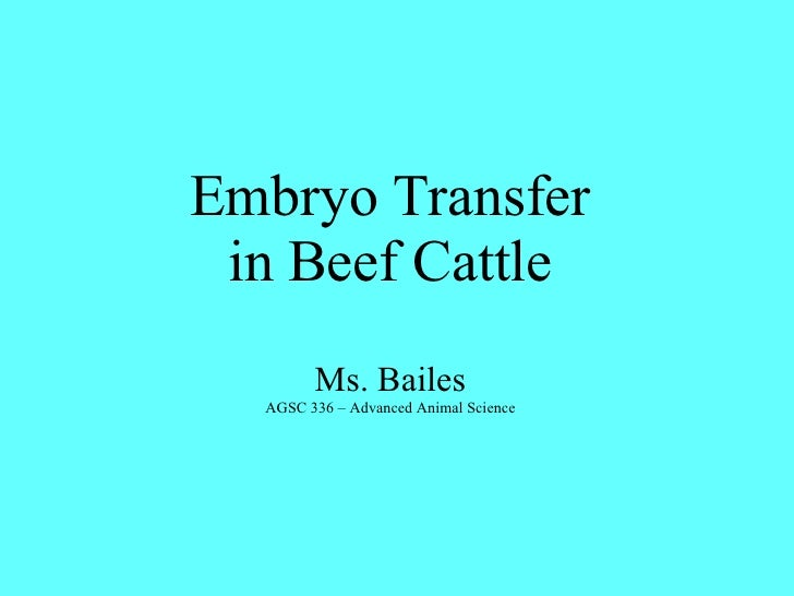 Embryo Transfer in Beef Cattle Ms. Bailes AGSC 336 – Advanced Animal Science