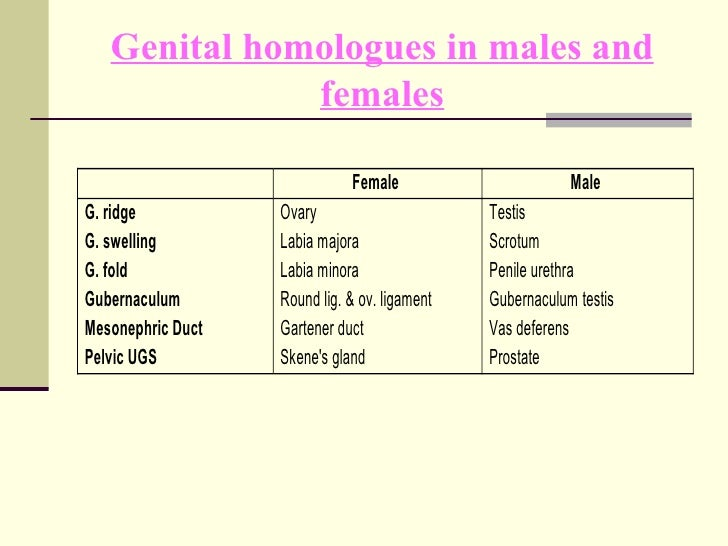 Vestibular glands lesser  definition of vestibular