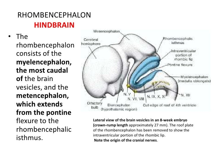 How to increase brain capacity naturally image 5