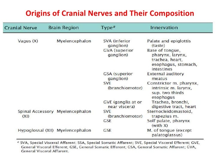 Initially, the cerebellar plate consists of neuroepithelial, mantle, and marginal layers.