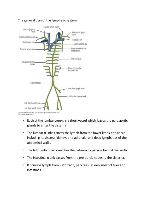 Embryology And Anatomy Of Lymphatics