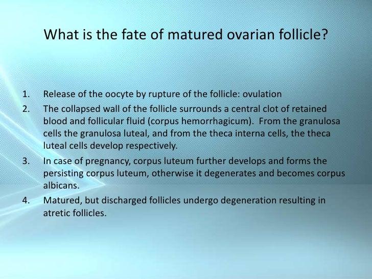Describe the fate of a mature follicle