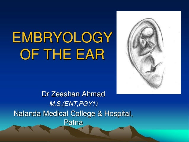 EMBRYOLOGY OF THE EAR        Dr Zeeshan Ahmad          M.S.(ENT,PGY1)Nalanda Medical College & Hospital,             Patna