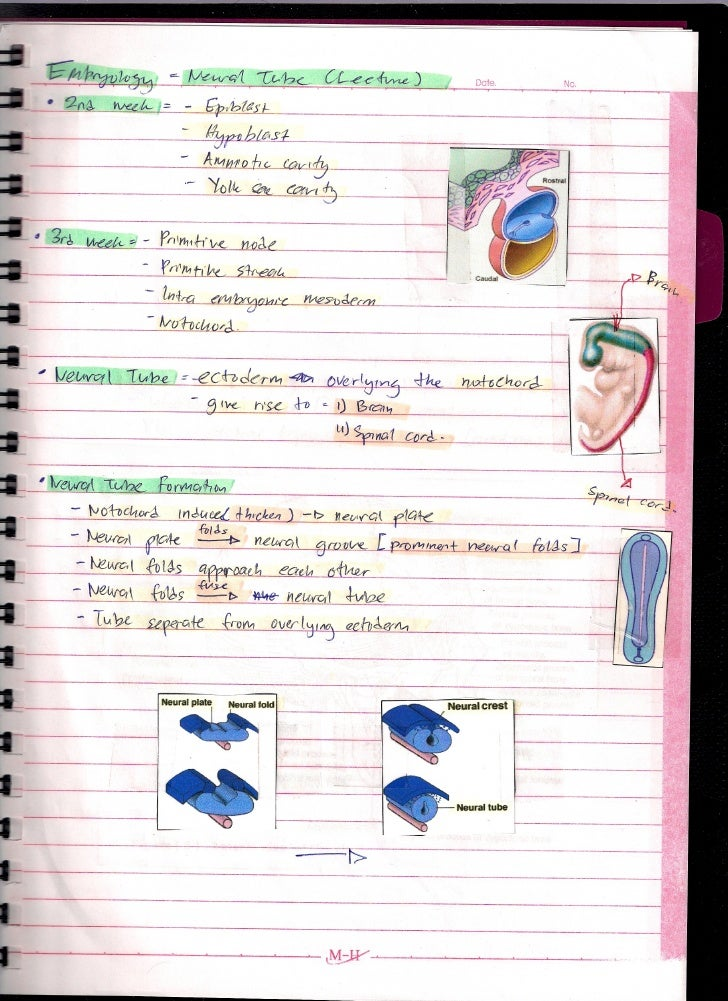 Embryology Of Neural Tube (Lecture)