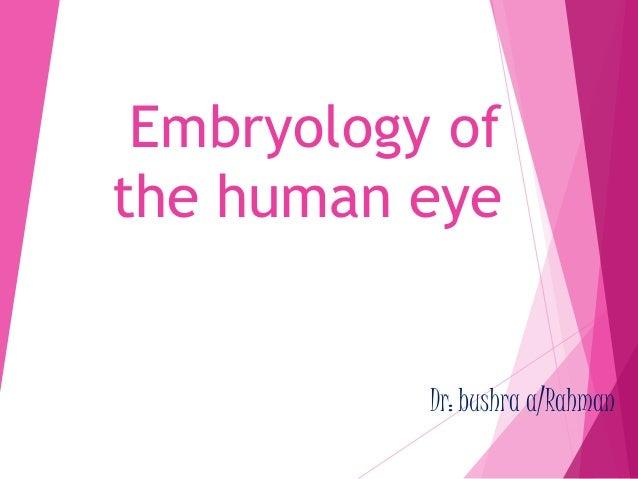 Embryology of  the human eye  Dr: bushra a/Rahman