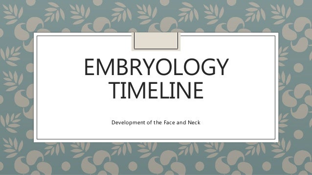 EMBRYOLOGY  TIMELINE  Development of the Face and Neck