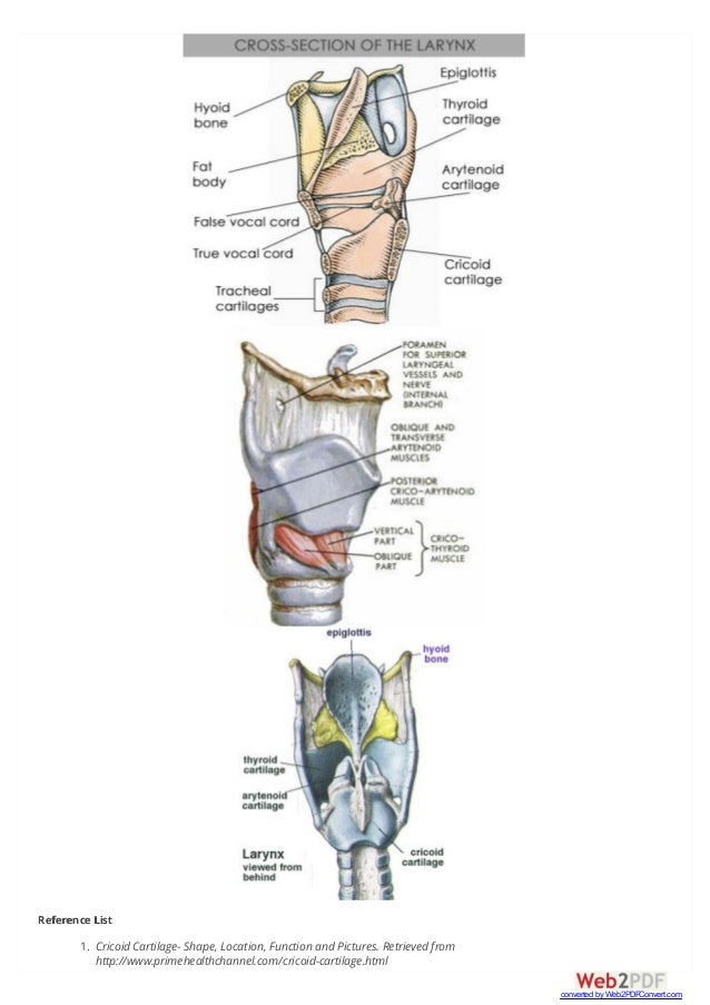 Cricoid Cartilage Functions Definition Fracture Anatomy Location