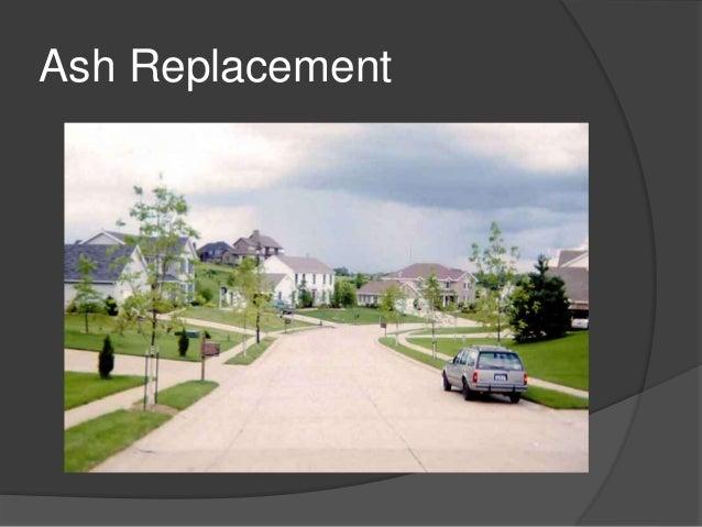 Emerald Ash Borer Homeowner Management Options