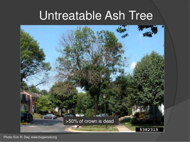 Amazoncom tree insecticide
