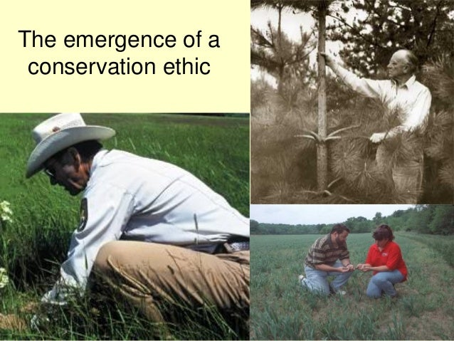 The emergence of a conservation ethic