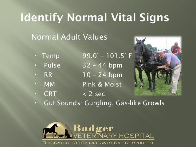 Common Equine Emergencies