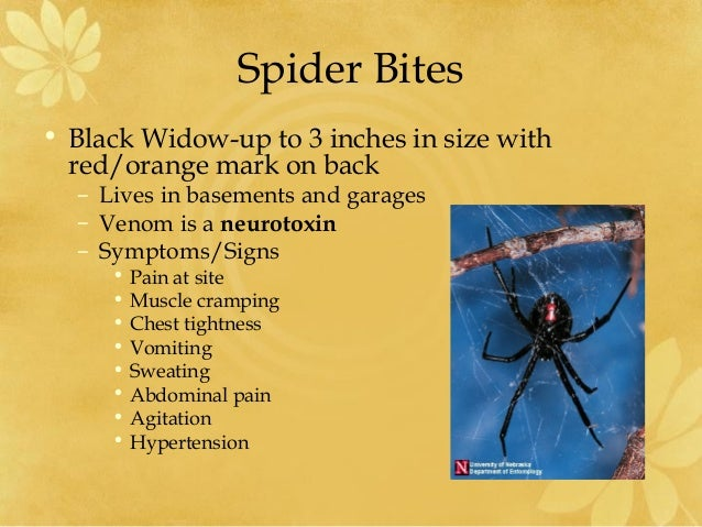 Black Widow Bite Pictures Early Stages