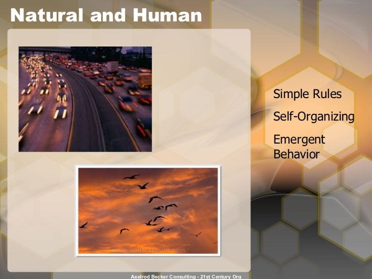 Natural and Human Simple Rules Self-Organizing Emergent Behavior