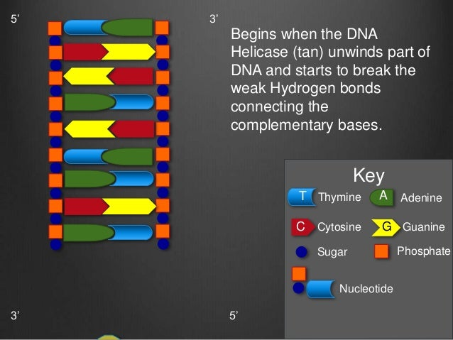 Emhoffc dna project ccuart Choice Image