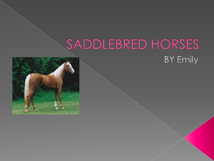 SADDLEBRED HORSES<br />BY Emily <br />