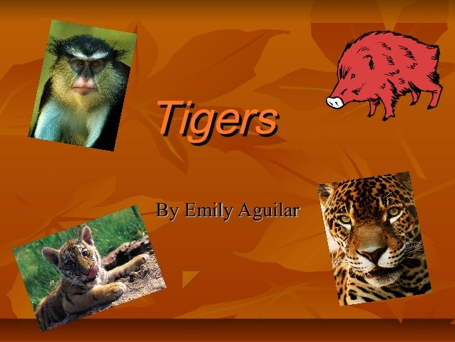 TigersBy Emily Aguilar