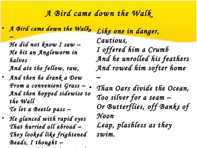 question and answer of poem a bird came down the walk