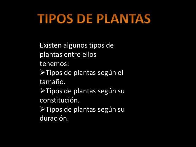 Clasificacion de la flora del mundo for Tipos de plantas forestales