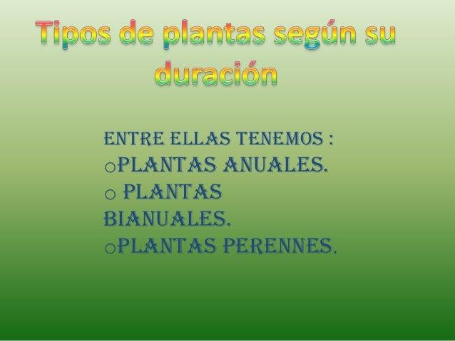 Entre ellas tenemos :oPlantas anuales.o Plantasbianuales.oPlantas perennes.