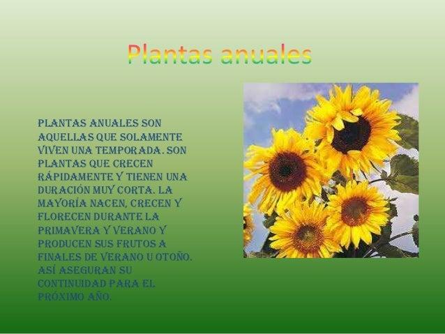 Plantas anuales sonaquellas que solamenteviven una temporada. Sonplantas que crecenrápidamente y tienen unaduración muy co...