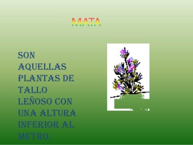 Sonaquellasplantas detalloleñoso conuna alturainferior almetro.