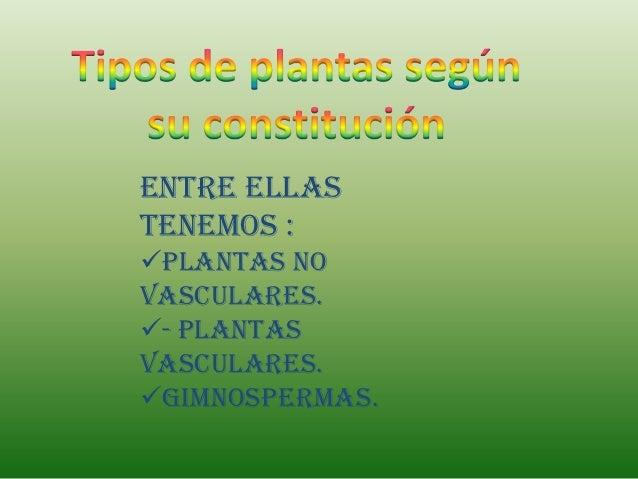 Entre ellastenemos :Plantas novasculares.- Plantasvasculares.Gimnospermas.