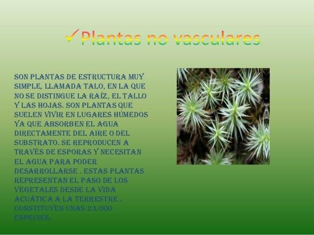 Son plantas de estructura muysimple, llamada talo, en la queno se distingue la raíz, el talloy las hojas. Son plantas ques...