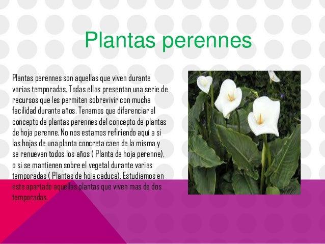 Las partes de las plantas for Plantas arbustos de hoja perenne
