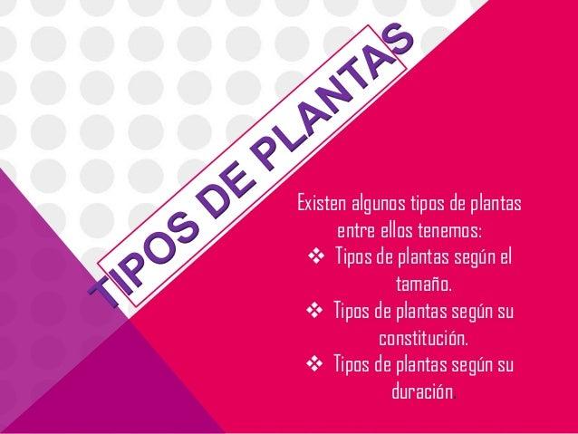Existen algunos tipos de plantas      entre ellos tenemos:  Tipos de plantas según el               tamaño.  Tipos de pl...